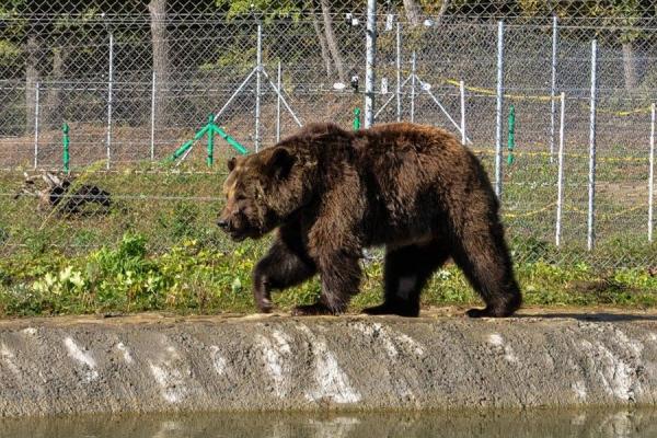 Притулок «Домажир»: рай для ведмедів, атракція для людей (Фото)