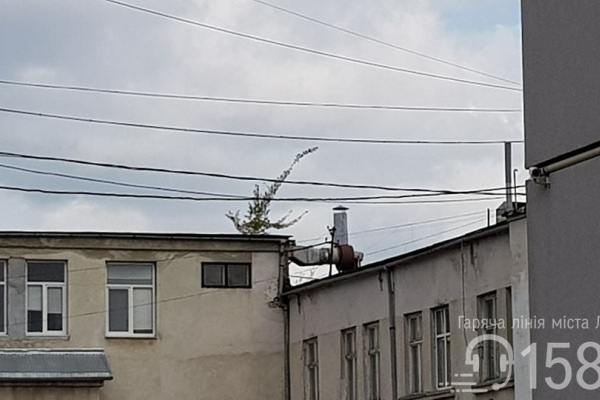 Львів'ян просять сповіщати про дикі рослини на будівлях