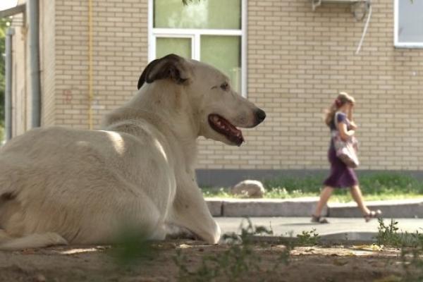 У Львові на жінку з немовлям напали собаки (Фото)
