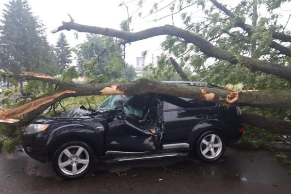 На Львівщині дерево розчавило легковик: є постраждалі (Фото)