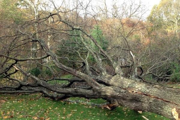 На Львівщині дерево смертельно травмувало чоловіка