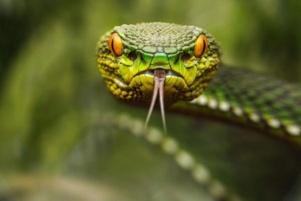На Львівщині жінка постраждала від укусу змії