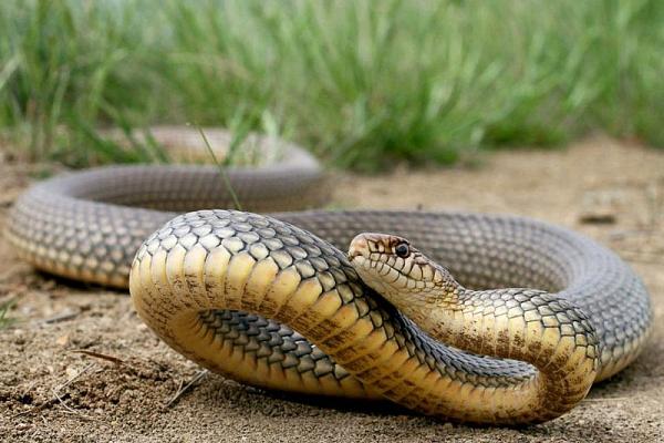 На Львівщині 55-річну жінку вкусила змія