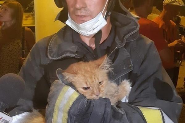 З-під завалів у Дрогобичі врятували кота