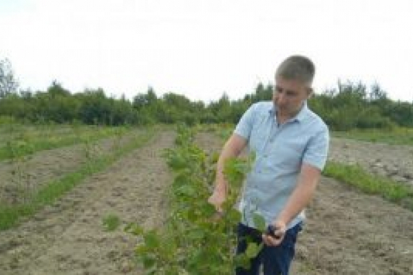 На Львівщині адвокат будує бізнес на горіхах