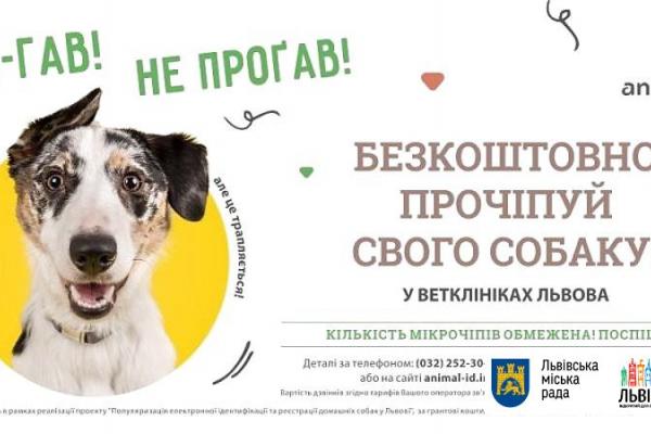 У Львові безкоштовно прочіпують 5 тис. домашніх собак