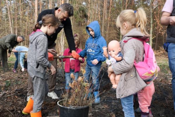 За один день у лісах Львівщини висадили понад 65 тисяч дерев (Фото)