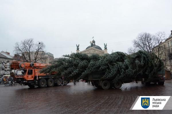 Стало відомо, коли засяють вогні на головній ялинці Львова