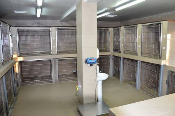 У львівській ветклініці карантин до 14 січня