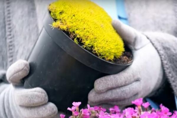 На Львівщині двоє крали квіти на цвинтарі, щоб заробити на 8 Березня
