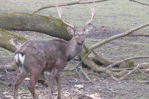 У лісах Львівщини мешкає 164 вовки та понад 48 тисяч зайців