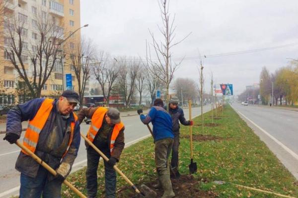 Цього тижня у Львові висадять близько 400 дерев