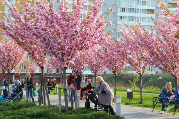 До Львова на сакури: 12 локацій для квітучих фотосесій (Фото)