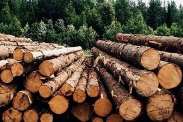 У Турківському районі поліцейські вилучили незаконно зрубану деревину