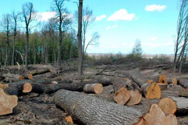 У Дрогобичі розслідують незаконну вирубку дерев в парку