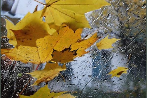На Львівщині на завтра оголосили штормове попередження