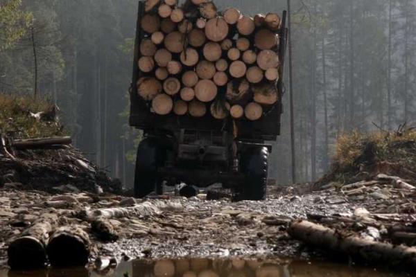 На Львівщині затримали майстра лісу держпідприємства, який систематично отримував «хабарі» за сприяння нелегальній вирубці та реалізації деревини