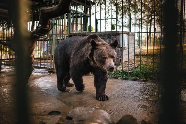 На Львівщині звільнили ведмедя, якого 12 років утримували в жахливих умовах відпочинкового комплексу (Відео)