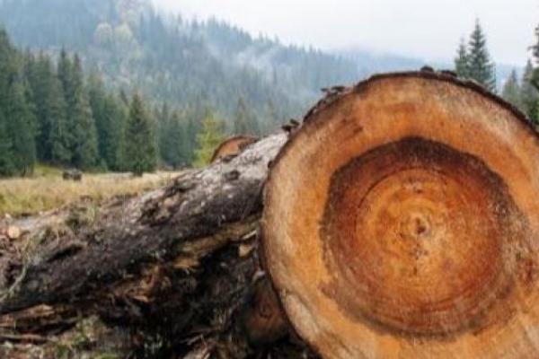 На Львівщині з'явиться лісова поліція і автоматичне анулювання лісорубних квитків
