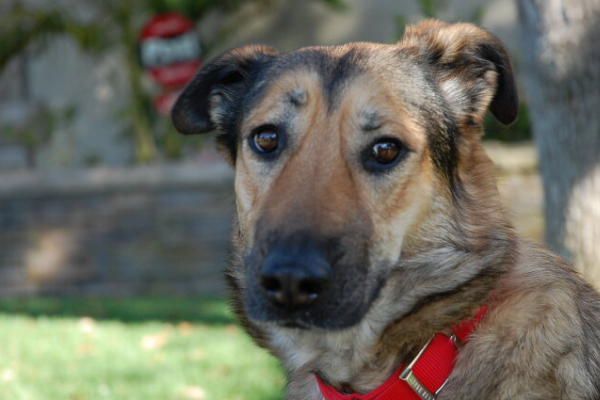 У Львівській області собаки притягли господарю людську ногу