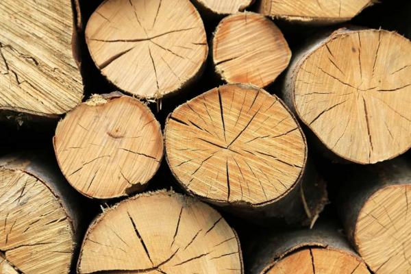 У Яворівському районі викрито схему незаконного збуту деревини працівниками лісництва