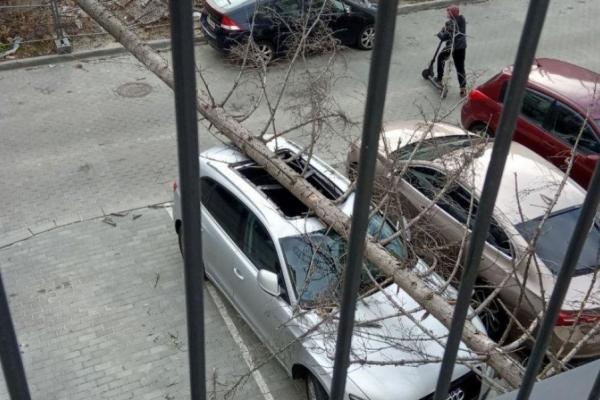 У Львові лютував буревій: піщана буря, повалені дерева та обвалений будинок